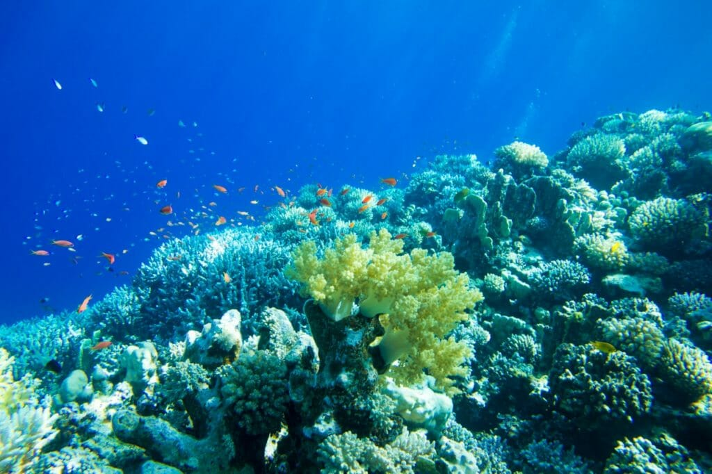 人類が海について知っているのは……およそ9%