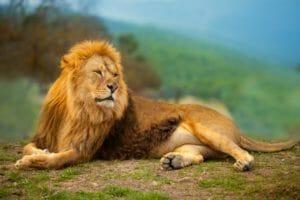【大人の雑学】ライオンも近づかない最強の動物は?