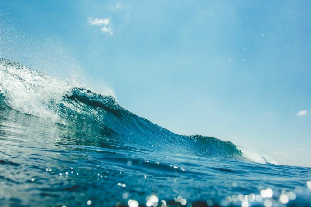 ロマンが広がる海の動物。人間の知らない未知がある