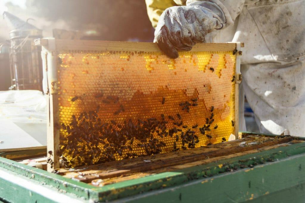 人類最古の食品「蜂蜜」